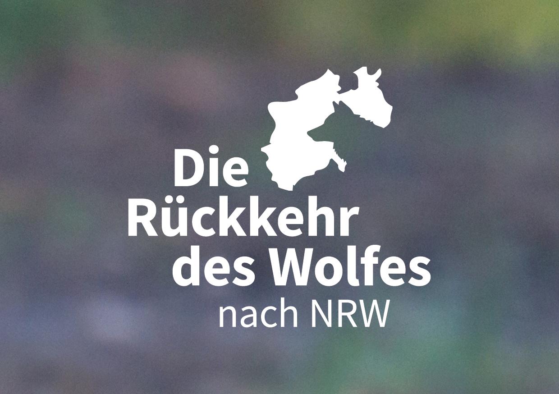 nabu-die-rueckkehr-des-wolfes-nach-nrw-1